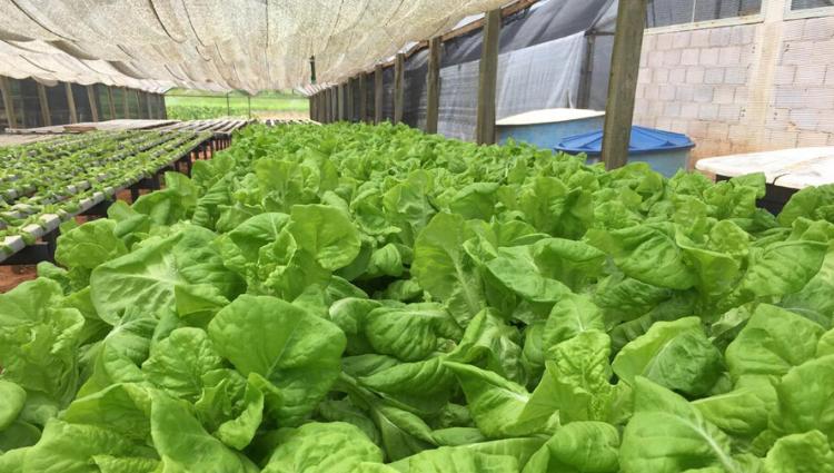 Campus Itapina realiza doação de hortaliças para Casa de Repouso em Colatina